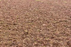 地面土壤耕种 库存照片