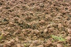 地面土壤耕种 图库摄影