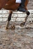 地面泥泞的骑马 库存照片