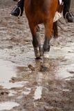 地面泥泞的骑马 免版税库存照片