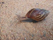 地面生长工厂小的蜗牛 库存照片