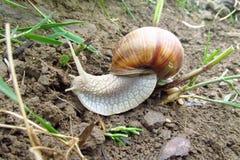 地面生长工厂小的蜗牛 免版税库存照片