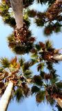 从地面的棕榈树 免版税图库摄影