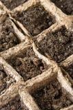 地面种子 免版税库存照片