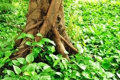地面结构树根 免版税图库摄影