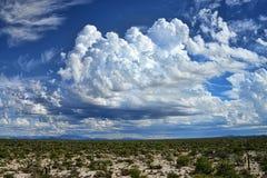 地面蛇沙漠亚利桑那 免版税库存照片