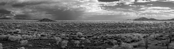 地面蛇沙漠全景 免版税图库摄影