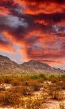 地面蛇沙漠日落 库存照片