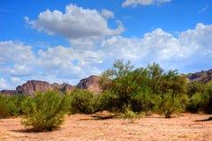 地面蛇沙漠 库存照片