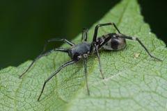 地面蜘蛛 免版税图库摄影