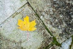 地面顶视图在公园-与秋叶的马赛克的 免版税库存图片