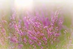 轻轻地紫色花 库存照片