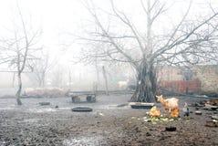 围场在村庄,早晨雾 图库摄影