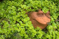 围场艺术青蛙藤爬行的詹妮 图库摄影