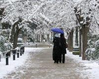 场面冬天 免版税库存照片