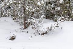 场面多雪的冬天 免版税库存照片