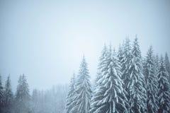 场面多雪的冬天 库存照片