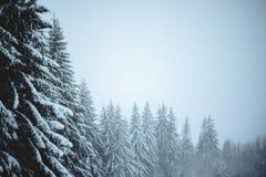 场面多雪的冬天 图库摄影