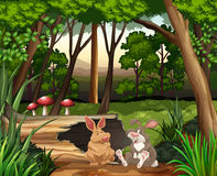 场面用两只兔子在森林里 皇族释放例证