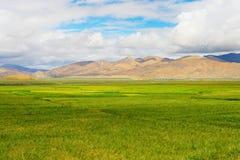 场面西藏 库存图片