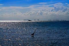 坎昆从Isla Mujeres海岛的旅馆区域 免版税库存照片