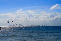 坎昆从Isla Mujeres海岛的旅馆区域 库存照片