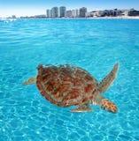 坎昆加勒比绿浪表面乌龟 免版税库存照片