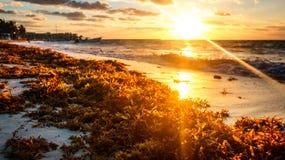 坎昆海滩日出 免版税图库摄影