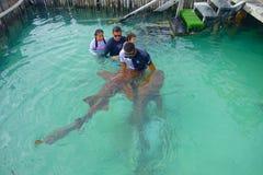 坎昆,墨西哥- 2018年1月10日:美好的室外观点的有接触鲨鱼的教练员的未认出的游人 图库摄影