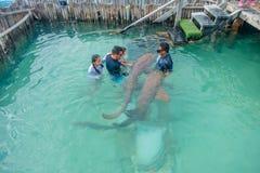 坎昆,墨西哥- 2018年1月10日:美好的室外观点的有接触鲨鱼的教练员的未认出的游人 库存图片