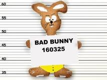 坏兔宝宝 库存照片
