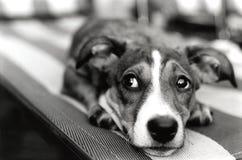 坏狗 库存照片