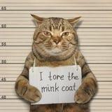 坏猫撕毁了貂皮大衣 免版税库存照片