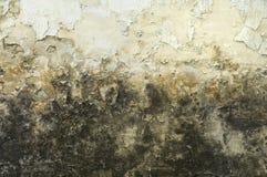 坏的发霉的老墙壁 库存照片