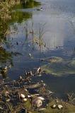 坏的池塘 图库摄影