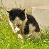 坏的猫 免版税库存图片