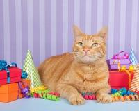 坐与生日礼物的橙色姜虎斑猫 库存照片