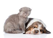坐与睡觉贝塞猎狗小狗的困小猫 查出在白色 库存图片