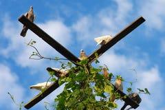 坐与蓝天的鸽子鸟 免版税库存照片