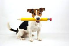 坐与铅笔的狗 图库摄影