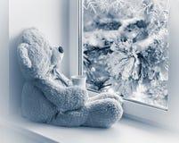 坐和看在窗口的熊 库存图片