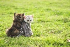 坐和看sunse的两只小猫 免版税库存图片