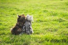 坐和看sunse的两只小猫 库存图片