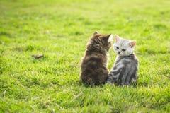 坐和看sunse的两只小猫 图库摄影