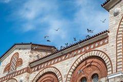 坐和飞行在一个石大厦的鸟 免版税库存照片