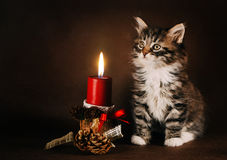 坐在一个圣诞节蜡烛旁边的蓬松小猫 库存图片