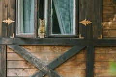 坐在一个木房子的窗口里的猫 库存图片