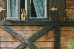 坐在一个木房子的窗口里的猫 图库摄影