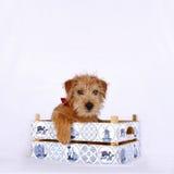 坐在一个木板箱的幼小小狗 免版税图库摄影