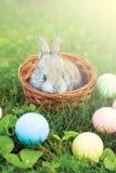 坐在一个柳条筐的一点复活节兔子用鸡蛋 免版税库存照片